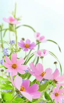 Нежные цветы скриншот 3