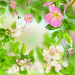 Нежные цветы Live Wallpaper