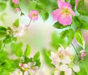 Нежные цветы logo