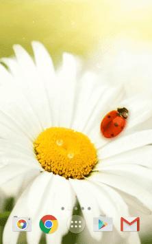 Весна, цветы обои 3Д - Природа ХД скриншот 3