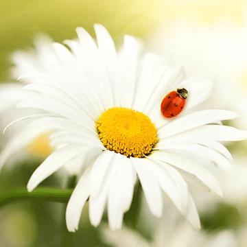 Весна, цветы обои 3Д - Природа ХД logo