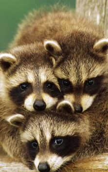 Очаровательные животные скриншот 4