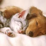 Очаровательные животные живые обои