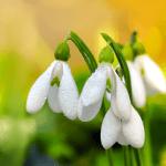 Цветы, весна Live Wallpaper