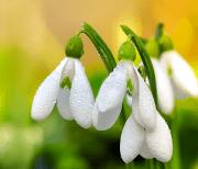 Цветы, весна logo