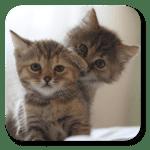 Коты живые обои