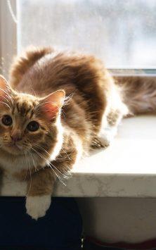 Кошка HD обои, смешные гифки скриншот 1