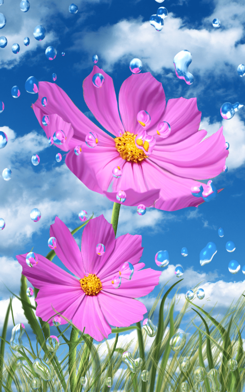 Летний дождь, цветы HD скриншот 1