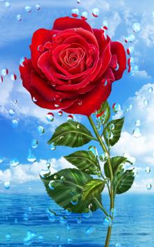 Летний дождь, цветы HD скриншот 2