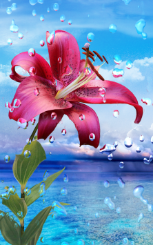 Летний дождь, цветы HD скриншот 3