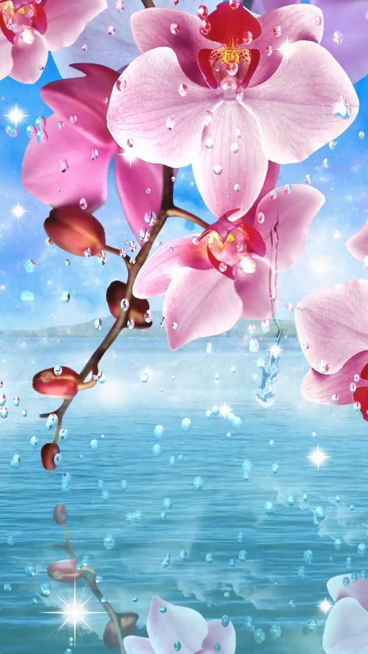 Летний дождь, цветы HD скриншот 4