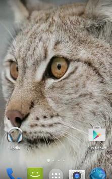 Рысь. Видео обои скриншот 1