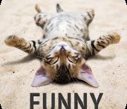 Забавные животные logo