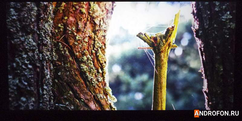 Кора дерева в лесу.