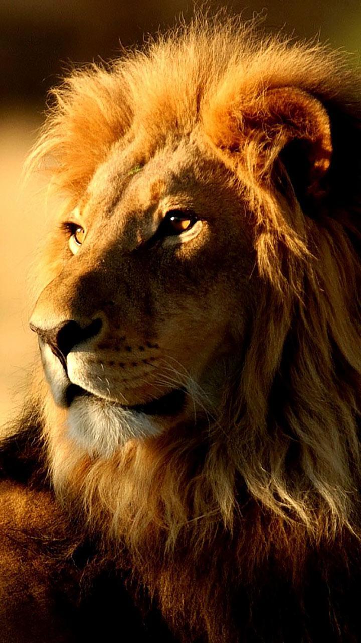 Львы скриншот 2