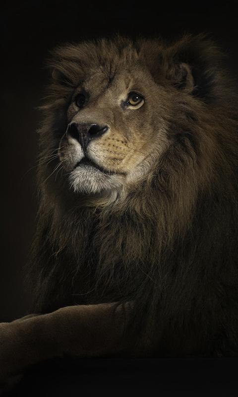 Львы скриншот 3