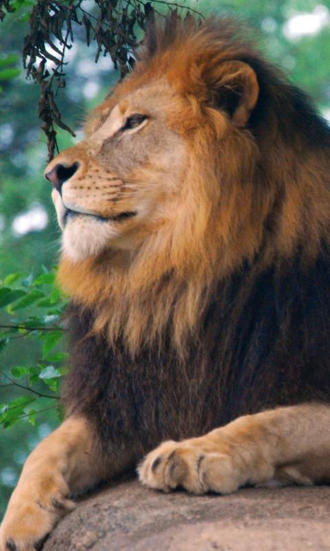 Львы скриншот 4