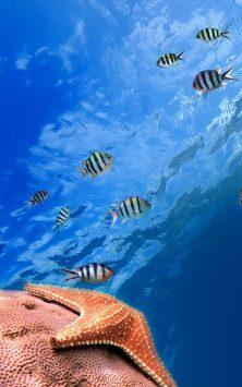 Рыбы Океанов скриншот 1