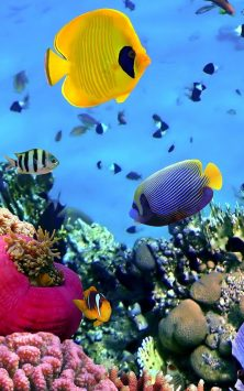 Рыбы Океанов скриншот 3