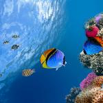 Рыбы Океанов
