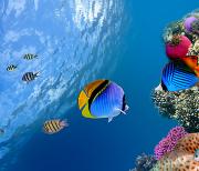 Рыбы Океанов logo