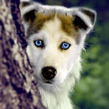 Собаки Live logo