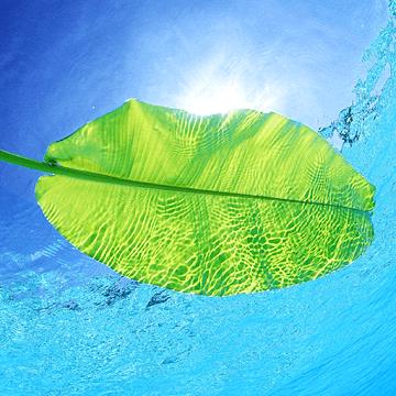 Velikolepie prirody logo