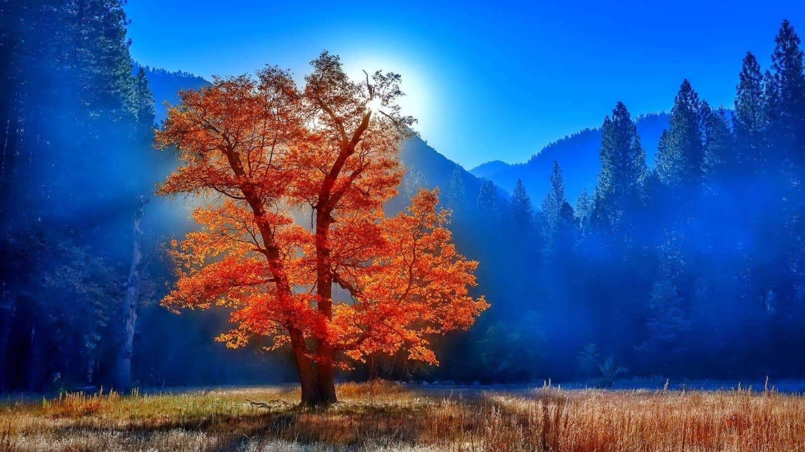 Деревья Live Wallpaper