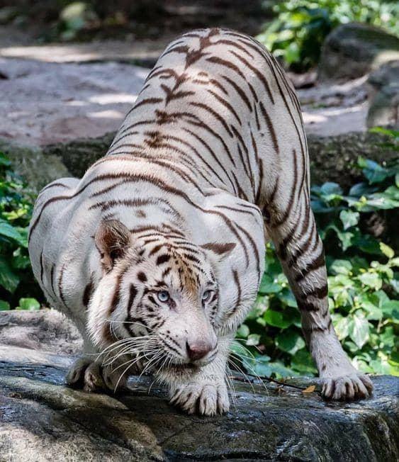 Tiger Video скриншот 1