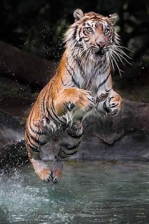 Tiger Video скриншот 4