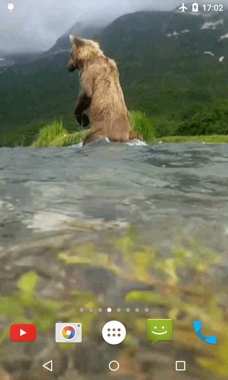 Медведь 4K-видео живые обои
