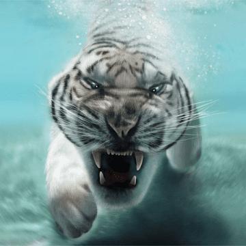 Tiger Live logo
