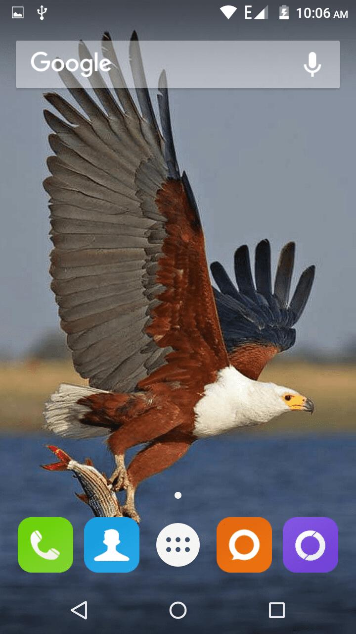 Eagle скриншот 1