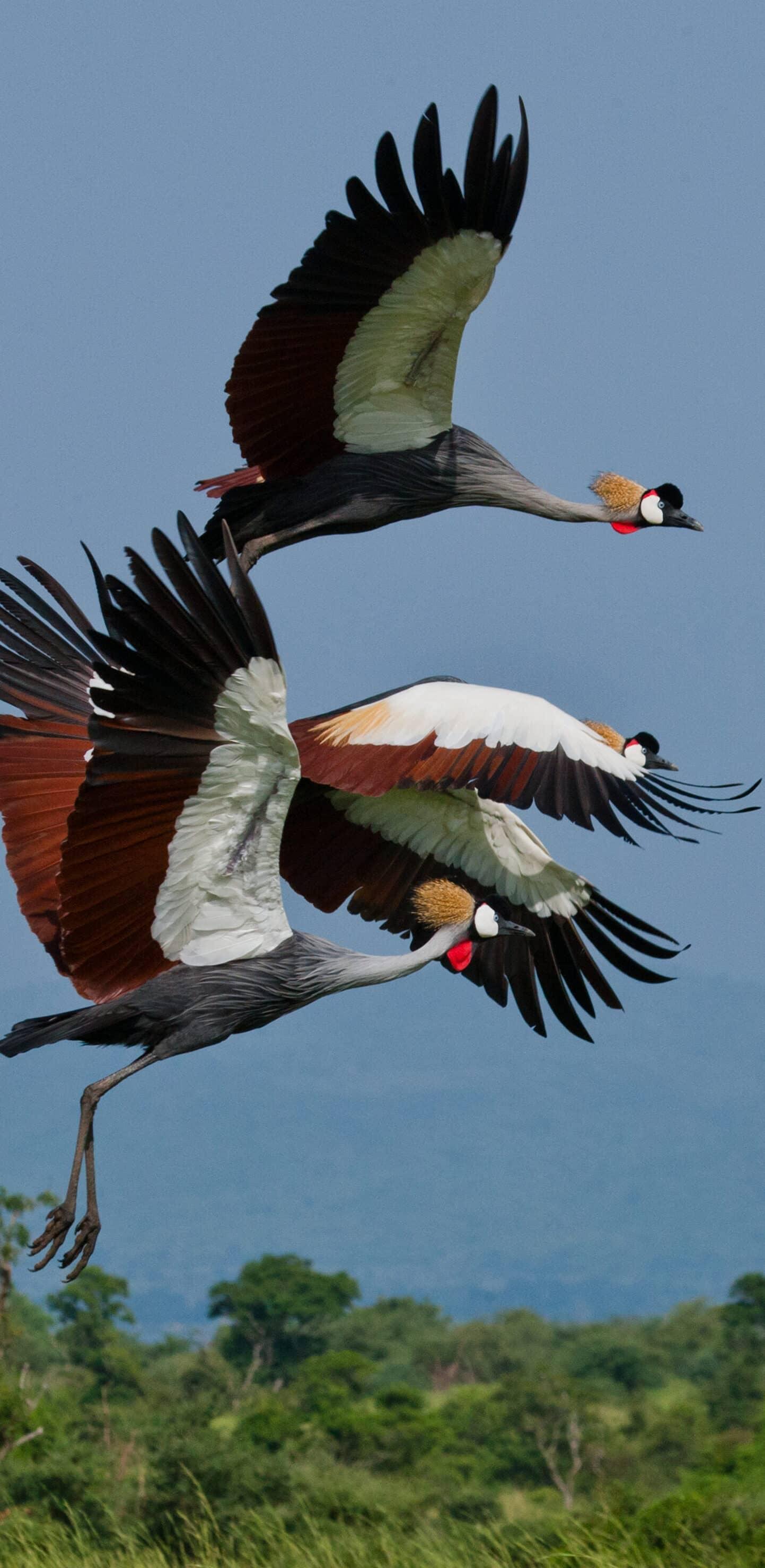 обои птицы