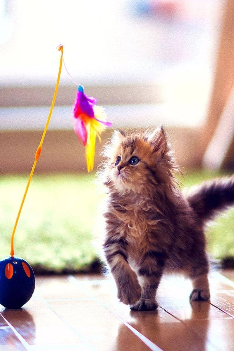 Cat video скриншот 1