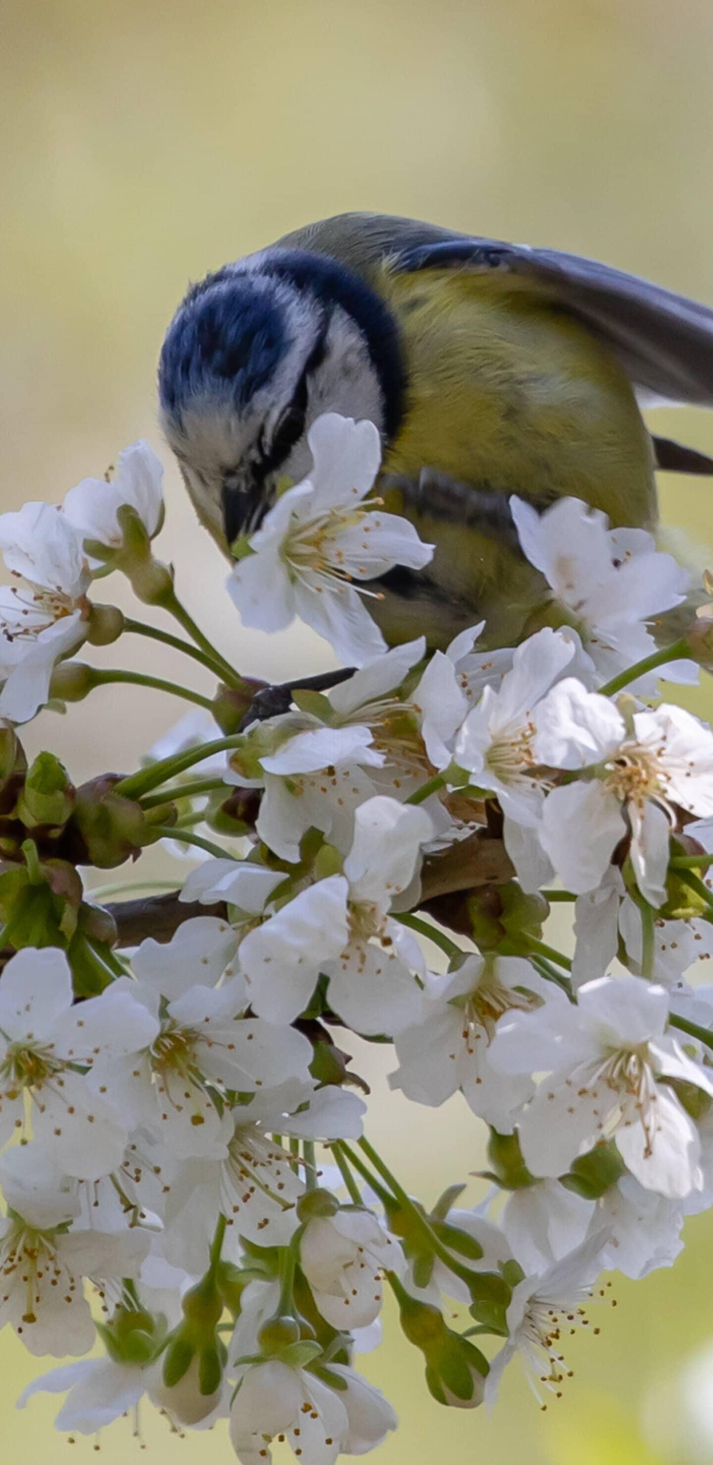обои цветы и птицы
