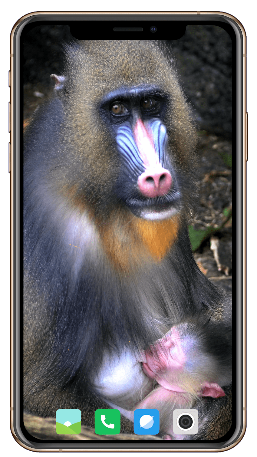 Monkey скриншот 2